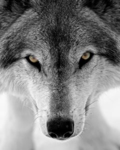 How to Feed Your Good Wolf: Tips for Mental Wellness